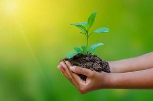 In the hands of trees growing seedlings bokeh green background Female hand holding tree on nature field grass Forest conservation concept photo