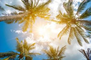 Coconut trees and sun with clouds over the sky. Summer concept. photo