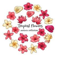 Tropical collection with exotic flowers in cartoon style vector