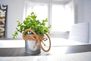 Green plant in a tin pot knotted rope on the wooden table in the sunlight photo