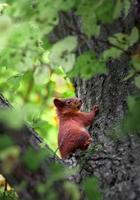 ardilla en el árbol foto