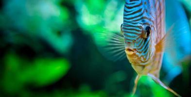 Detail of Aquarium fish photo
