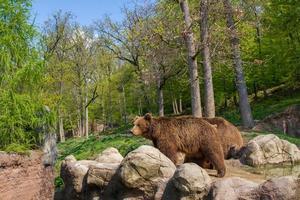Bears in Zoo photo