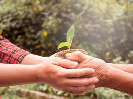 Senior and Adult are holding young plant on blur nature background with sunlight. Concept of generation and development. photo