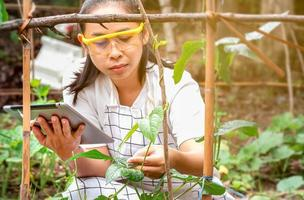 Young female farmer sittining in green long beans farm with tablet in her hands and examining crop. photo