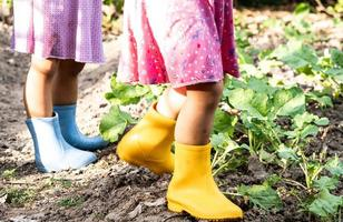 Happy two child in yellow and blue boots are watering the vegetables grown in the backyard. Close-up of legs photo