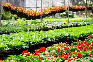 dentro de un amplio invernadero para plantar flores para vender plantas y flores en primavera. foto