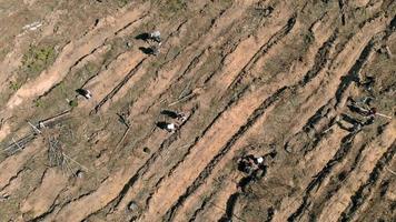 restauração florestal ecologia conservação tiro aéreo video