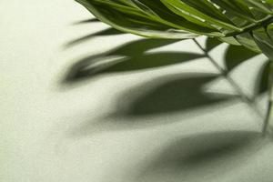 The Minimal tropical plant composition photo