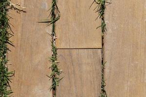 Grass coming through wood deck photo