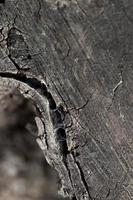 Close up wood texture background photo