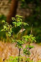 pájaro sentado en el árbol foto