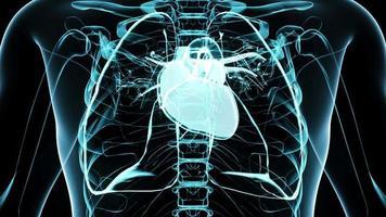 Coração humano transparente 3D para pesquisa médica video