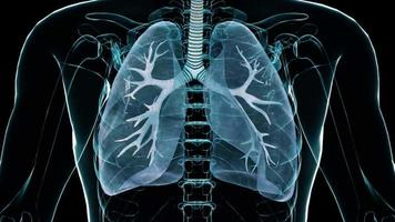 3d human lungs for medical research on organ system of body video