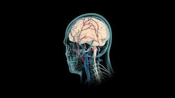 Human Brain 3D Model video