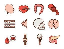 cuerpo humano anatomia órganos salud cabeza corazón intestino cráneo cerebro dientes línea de colección y relleno de iconos vector