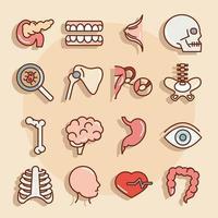human body anatomy organs health pancreas teeth skull bone eye stomach icons collection line and fill vector