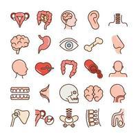 cuerpo humano anatomia órganos salud intestino cabeza oreja sangre cráneo cerebro iconos línea de colección y relleno vector