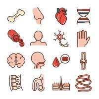 cuerpo humano anatomia organos salud hueso nariz corazon adn cerebro mano sangre iconos linea de recogida y relleno vector
