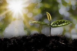 las plántulas crecen en el suelo. foto