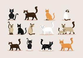 bundle of cats feline animals icons vector