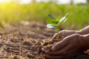 Human hands are planting trees and watering the plants to help increase oxygen in the air and reduce global warming. photo