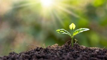 Small trees with green leaves growing naturally and soft sunlight, sustainable plant growth idea. photo