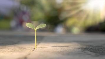 un árbol crece en un piso de cemento con paciencia. concepto de dificultad para cultivar plantas. foto