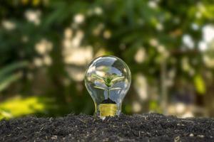 El árbol crece en bombillas, ahorro de energía y conceptos ambientales en el día de la tierra. foto
