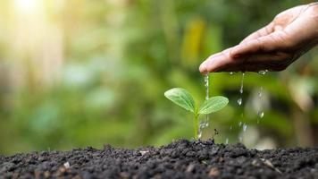Hand watering plants that grow on good quality soil in nature, plant care and tree growing ideas. photo