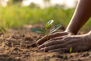 Human hands planting seedlings or trees in the soil Earth Day and global warming campaign. photo