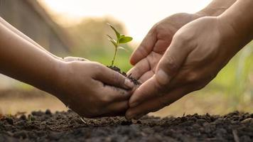 Children and adults work together to plant small trees in the garden, planting ideas to reduce air pollution or PM2.5 and reduce global warming. photo