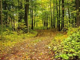 un sendero en el bosque foto