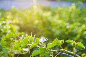Flower vine background photo