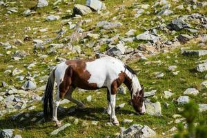 Horses in the mountains photo