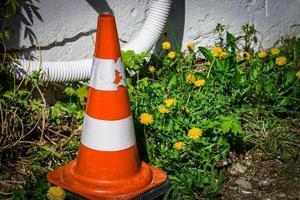 Cono de carretera rojo y blanco de pie cerca de la pared en florecientes dientes de león amarillos y hojas verdes foto