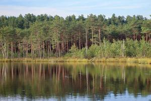 Forest standing along lake bank landscape with blue sky and trees reflection on water photo