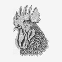 boceto retrato de pollo aislado sobre fondo blanco con lápiz.Ilustración de vector de cabeza de gallo dibujado a mano. vector premium