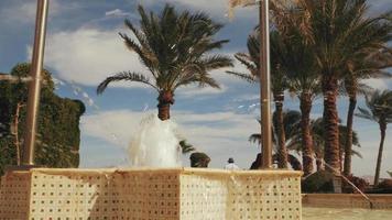 fontaine près des palmiers video