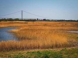 Reed beds at Far Ings Nature Reserve North Lincolnshire with a view of the Humber Bridge photo