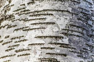Background of natural brown tree bark photo