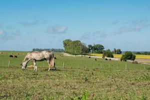 Farm view and a horse photo