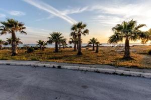 Marsala palm trees at sunset photo