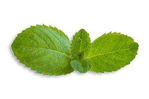 menta verde fresca aislado en blanco foto