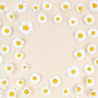 flores de manzanilla sobre fondo beige con espacio de copia redonda en el medio. foto