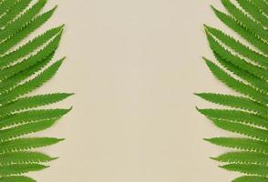 hojas de helecho verde sobre fondo beige con espacio de copia. foto