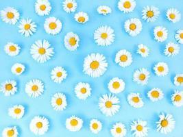 patrón de flores de manzanilla sobre fondo azul. foto