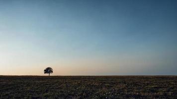 solo árbol en el prado. solo árbol capturado en el prado en la montaña rajac, serbia. foto