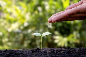 los agricultores están regando a mano pequeñas plantas con el concepto del día mundial del medio ambiente. foto