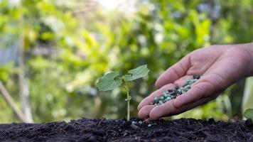 The hands are fertilizing the seedlings and watering the seedlings growing on fertile soil. Agriculture concept, Protect Natur photo